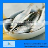 Fresh fish wholesale fresh frozen sardine