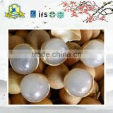 Chinese famous fruit Canned Longan Fruit