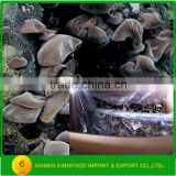 Best Seasoned Dried Black Fungus Mushroom in Stock