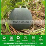 W25 Dayu no.4 deep green hybrid seedless watermelon seeds, yellow inside flesh, 7-8kgs in weight, 12% brix