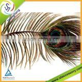 2015 new fashion wholesale indian peacock feather