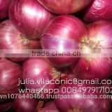 Red Onion/Scallion Best price (Viber/WhatsApp: +84979171029 /Skype:julia.huynh7)