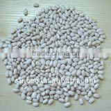 White Dried Bean