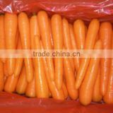 Carrot Type and Fresh Style 2016 New Crop Fresh Carrot