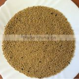 High quality White mustard seeds