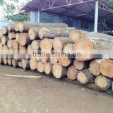 Vietnamese teak wood log
