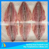 iqf frozen pacific mackerel fillet