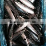 Frozen Pacific Mackerel Fish Whole Round