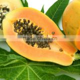 SunShine Health Food of Papaya Fruit for Skin Whitener & Body Lotion with good price