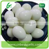 China supplier fresh quail eggs