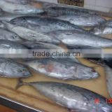 Delicious body part salt flake in vegetable oil canned tuna fish price