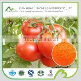 100% natural tomato extract powder/tomato extract lycopene