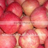 Paper Bagged Fuji Apple With Good Quality