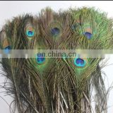 hot selling natural 90-100cm peacock feather