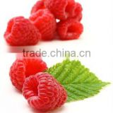 200mg Capsules Raspberry Ketone Slimming Product