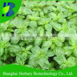 Top quality basil herb seeds for planting