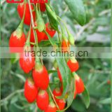 2016'crop Healthy , Green, Dried Goji Berry for Sex Product Goji (BRC,Kosher,ISO22000, ISO9000)