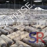 Hot sale from China professional manufacturer shiitake mushroom log