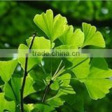 For cure hypertension ingredients Ginkgo 24% GingkoFlavoglycosides 6% Total terpene lactones extract of ginkgo biloba