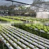 NFT Gully PVC Hydroponic factory