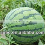 Emerald honey chinese hybrid watermelon seed for sale