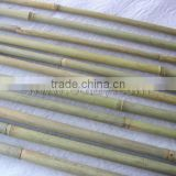Nature Green Bamboo Poles