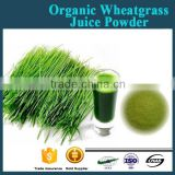 Extract powder 10:1 organic wheat grass