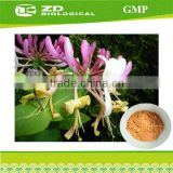 Poultry feed formulation 50% Chlorogenic acid lonicera caerulea extract powder