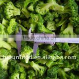 IQF Broccoli, frozen broccoli