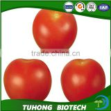 Strong fruit setting pink Xi hong shi zhong zi hybrid tomato seeds Tomato Tree Seed