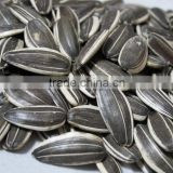 Price Of Sunflower Seeds 5009 With Good Quality Lowest Price
