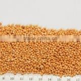 Best Quality Yellow Millet