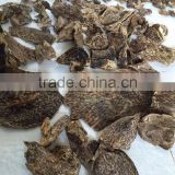 Quang Nam Natural Agar wood chips , oud chips - 7 kilogram available