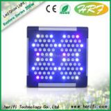 Herifi Wang Jason led grow light  full spectrum on wholesale price