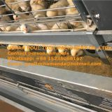 Mauritania Sale Poultry Farm Equipment - Broiler Cage & Meat Chicken Cage & Chicken Coop in Broiler House & Chicken Shed