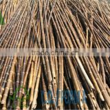 Black Bamboo Poles/black stakes/black bamboo sticks/cheap sticks