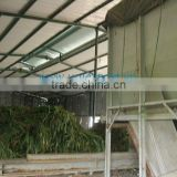 Vietnam High quality Corn Silage for Animal Feed