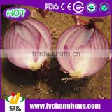 2014 4-8cm Onion for India Market