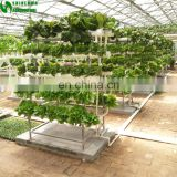 Commercial Hydroponics Systems With Food-grade PVC Gully