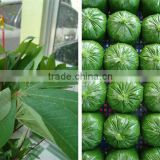 Cassava Leaf Grade A with competitive price from Vietnam