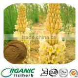 100% High quality Cistanche Tubulosa Extract Echinacoside10% in bulk supply