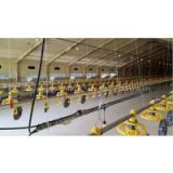 Automatic Chicken layer feeding and drinking line system Poultry Equipment For Chicken Farm