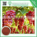 High quality grape seed extract with low price bulk in supply 80% Polyphenol CAS NO 84929-27-1