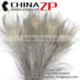 CHINAZP Leading Supplier Wholesale Cheap Full Eye Dyed Grey Long Peacock Tail Feathers