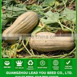 PU11 Nanguawang big size sweet pumpkin seeds for agriculture planting, hybrid pumpkin seeds