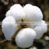 Hot Selling High Quality Cheap Pakistan Raw Cotton