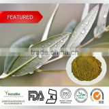 High quality Olive leaf extract Wholesale, Natural Water Soluble Olive Extract