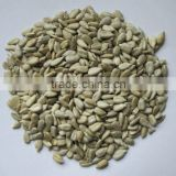 chinese bakery sunflower seeds kernel