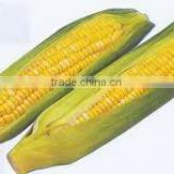 Vietnam Yellow Corn for Animal Feed