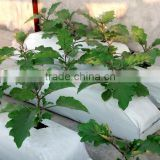 Grow Bags with Coco peat Filled for Sale